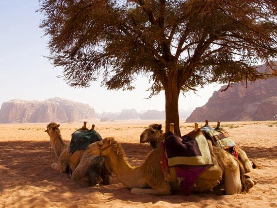 🐹 Город Акаба, оазис Иордании