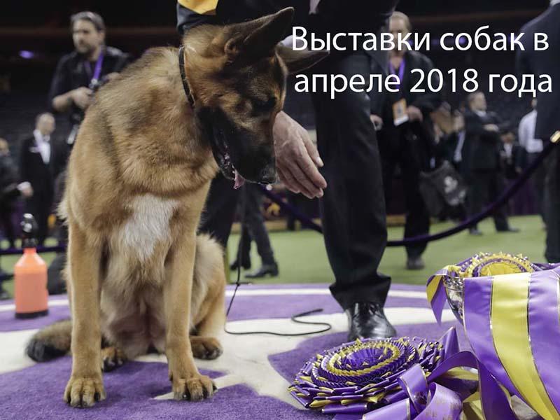 Выставки собак в апреле 2018