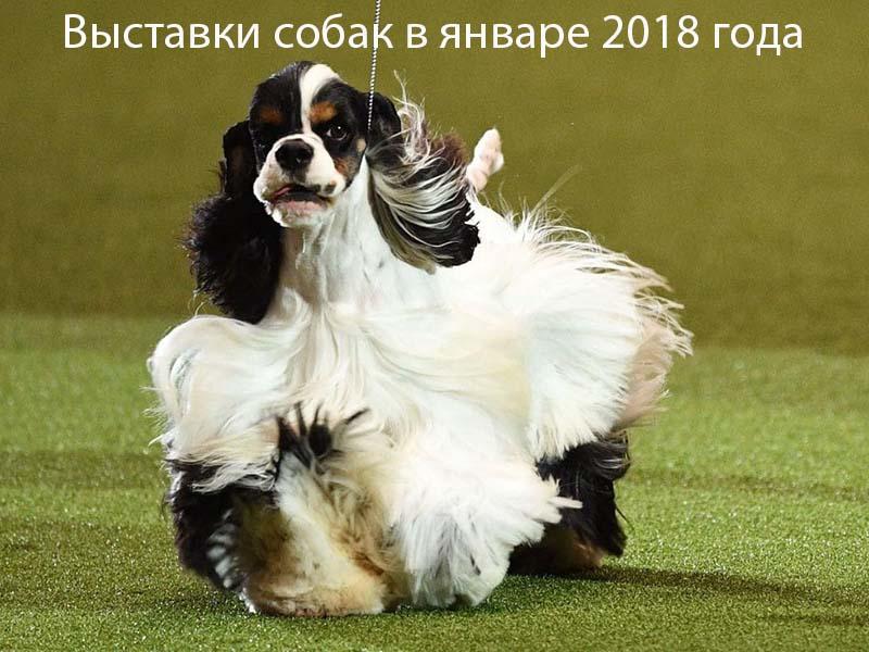 Выставки собак в январе 2018