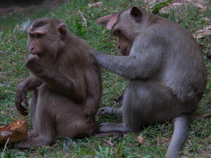 Остров обезьян, Сиануквиль