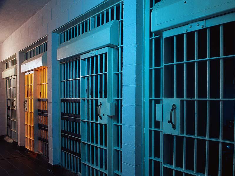 В тюрьму за грибы