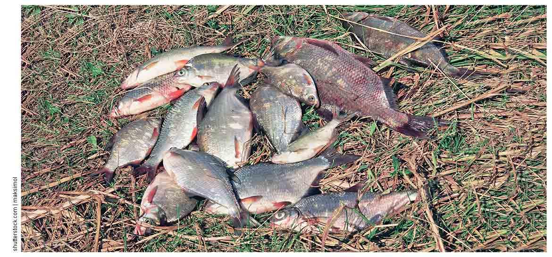 Рыбалка и отдых на озере Великое в Рязанской области