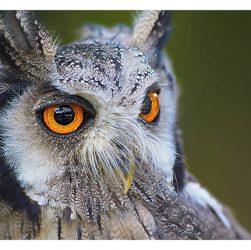 есть ли уши у птиц уши