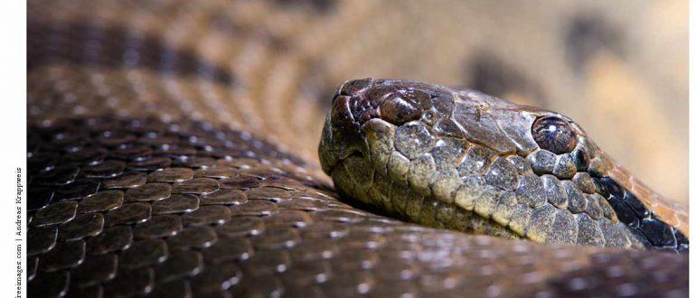Змеи Подмосковья