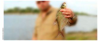 Размеры рыб разрешенные к вылову