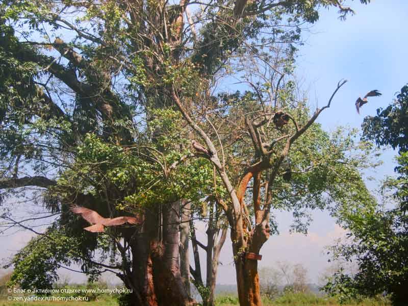 Птицы в национально парке озера Богория