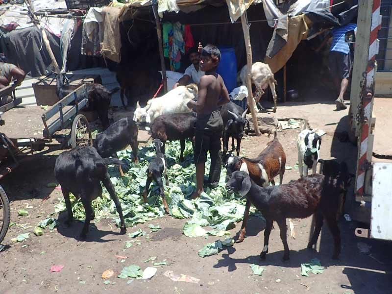 Животные в Индии