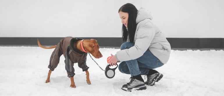 Как распознать признаки обморожения и гипотермии у собаки