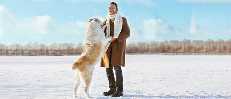Как отучить собаку прыгать на хозяина и гостей