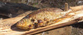Как в вкусно приготовить рыбу на костре