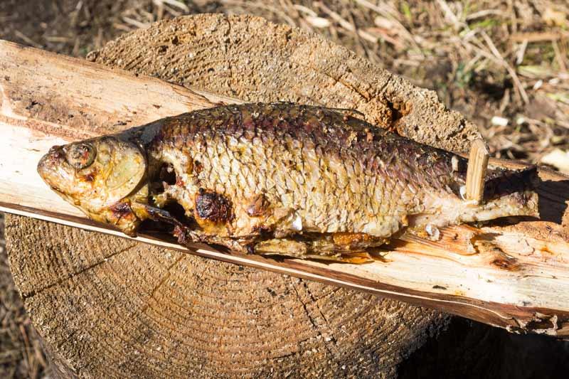 Готовим рыбу на костре