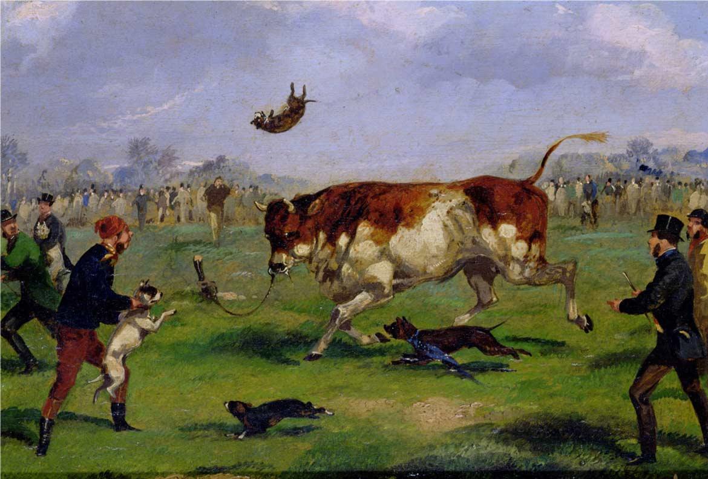 Бои бульдогов с быками