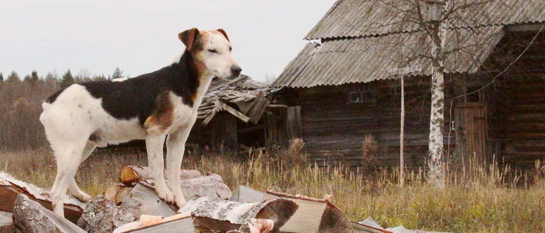 Собаки в плохую погоду