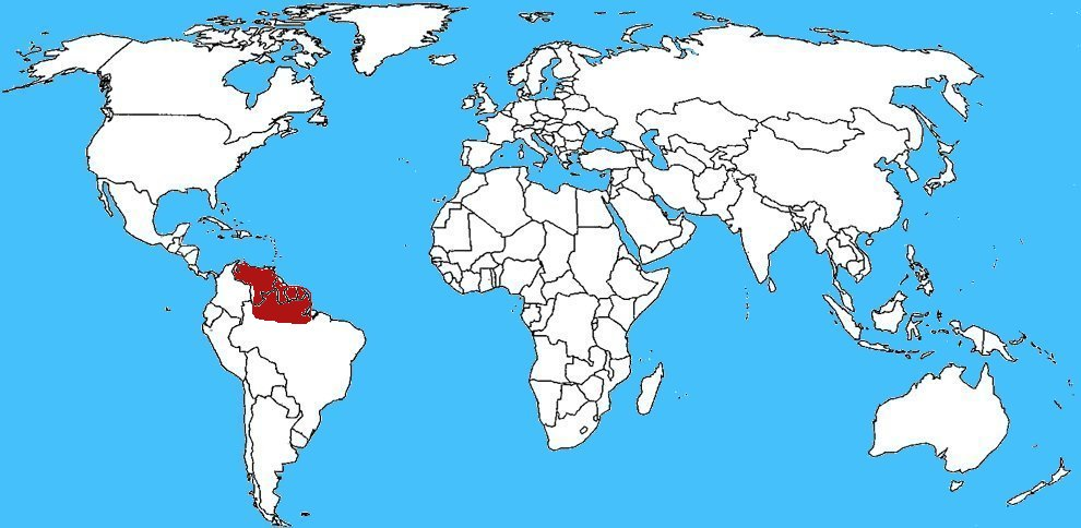Карта распространения паука голиафа