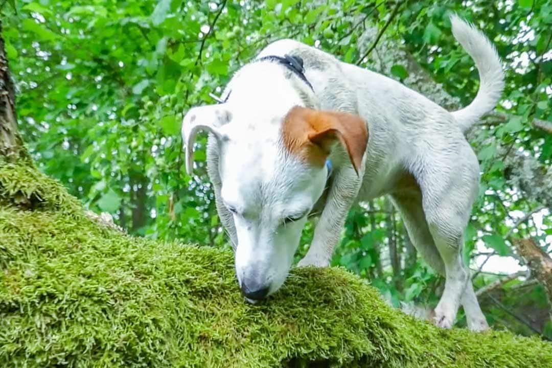 выгул-активной-собаки