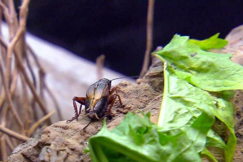 Животный корм для ящериц