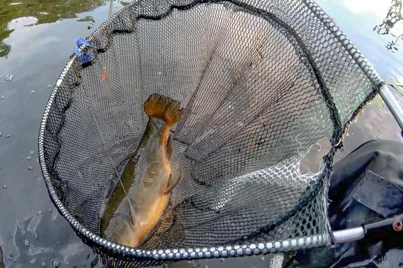 Всегда используйте подсак на линевой рыбалке