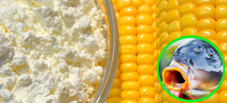 Для чего нужно использовать кукурузную муку в прикормке?