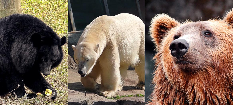 спрей от медведя